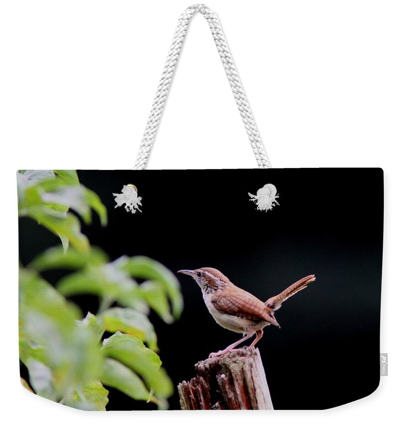 Carolina Wren Weekender Tote Bag featuring the photograph Wren - Carolina Wren - Bird by Travis Truelove