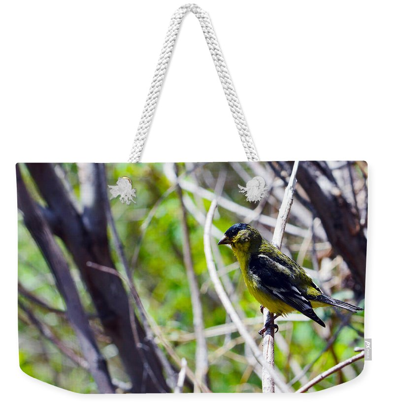 Bird Weekender Tote Bag featuring the photograph Yellow Bird by Brent Dolliver