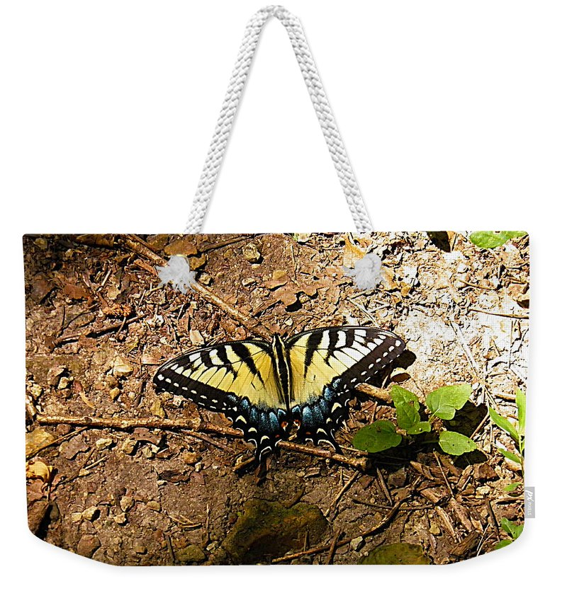 Butterfly Weekender Tote Bag featuring the photograph Yellow Butterfly by Nick Kirby