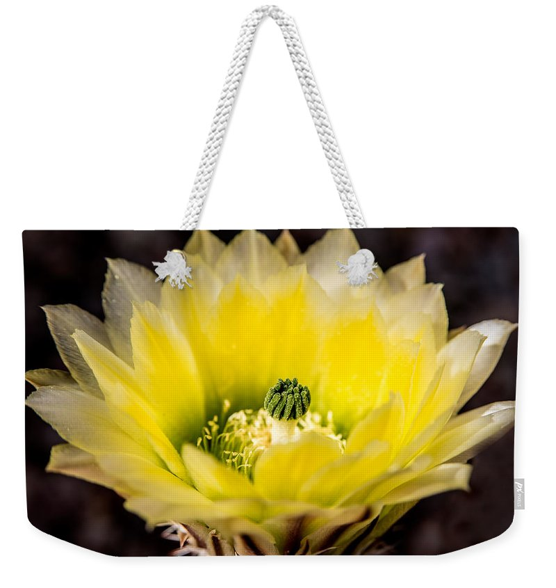 Yellow Flower Weekender Tote Bag featuring the photograph Yellow Cactus Flower by Onyonet Photo Studios