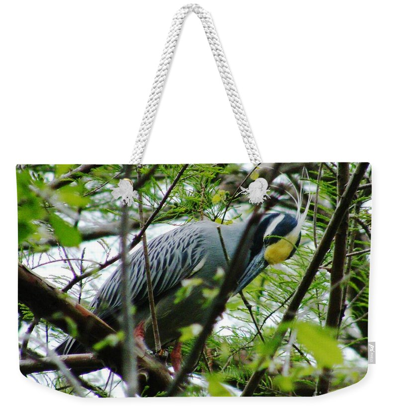 Bird Weekender Tote Bag featuring the photograph Yellow Crowned Night Heron In Display by Lizi Beard-Ward