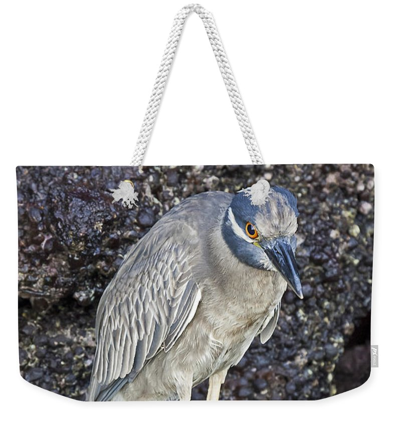 Designs Similar to Yellow-crowned Night Heron