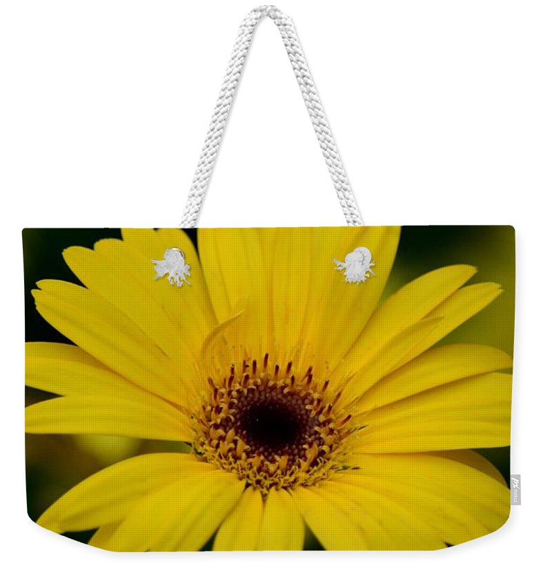 Yellow Daisy Weekender Tote Bag featuring the photograph Yellow Daisy by Maria Urso