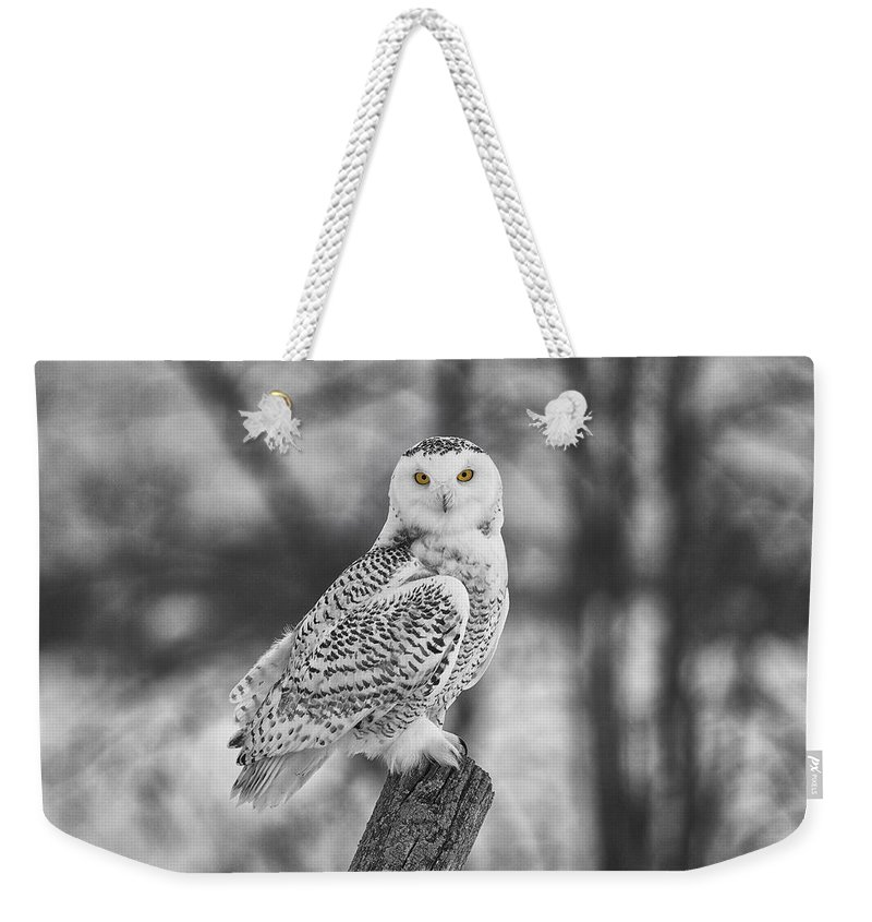 Eyes Weekender Tote Bag featuring the photograph Yellow Eyes by Eunice Gibb
