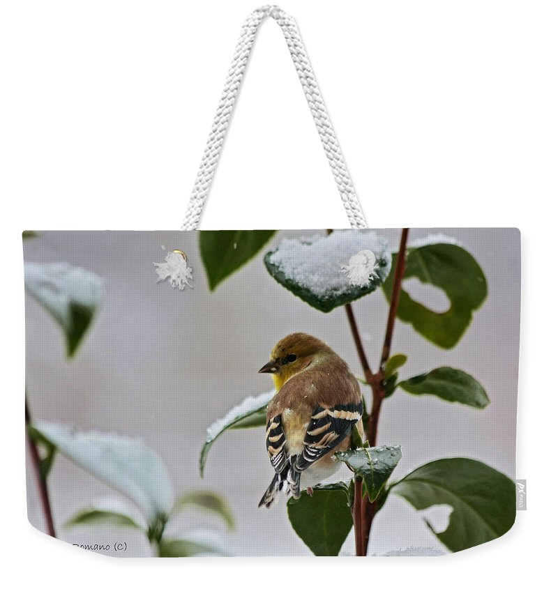 Goldfinch Weekender Tote Bag featuring the photograph Goldfinch On Branch by Denise Romano