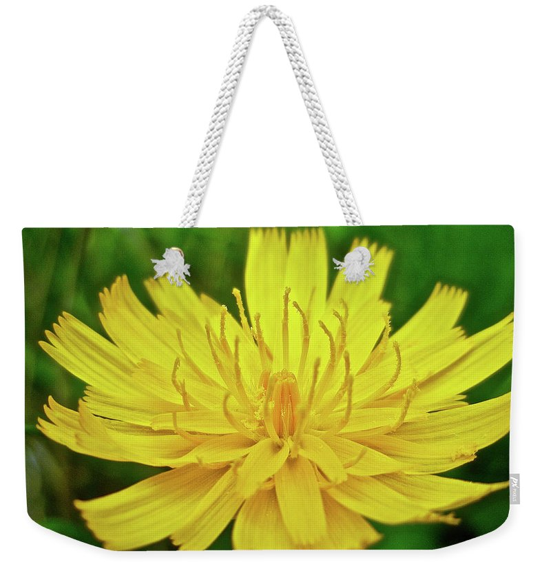 Hawkweed Weekender Tote Bag featuring the photograph Yellow Hawkweed - Hieracium Caespitosum by Mother Nature