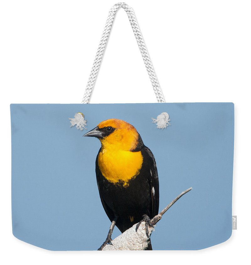Black Bird Weekender Tote Bag featuring the photograph Yellow Headed Blackbird by Jack Bell