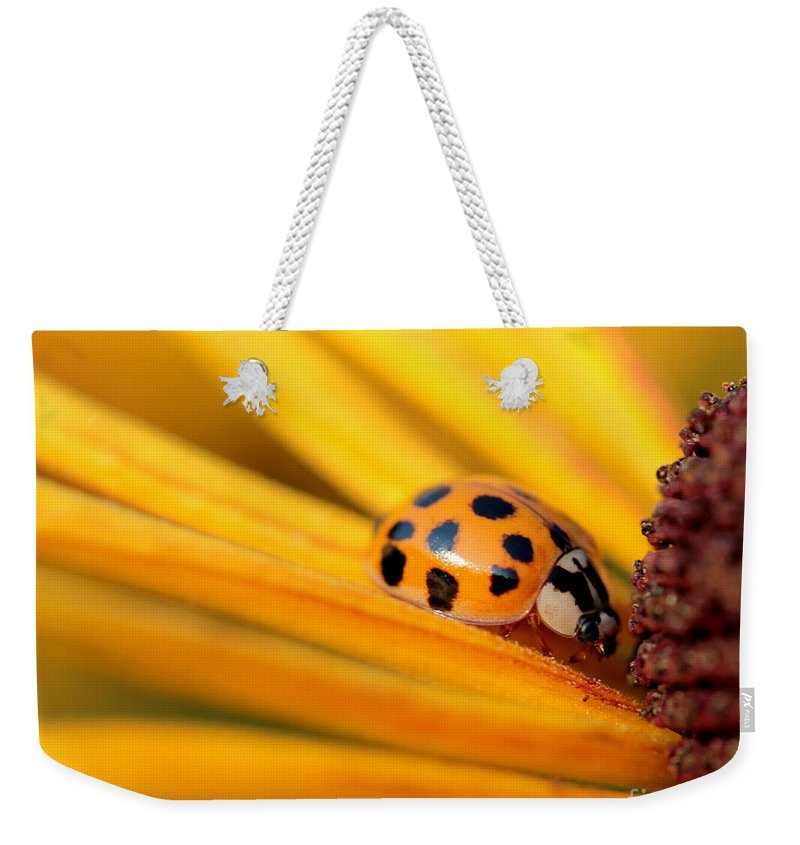 Lady Weekender Tote Bag featuring the photograph Yellow Lady - 1 by Kenny Glotfelty