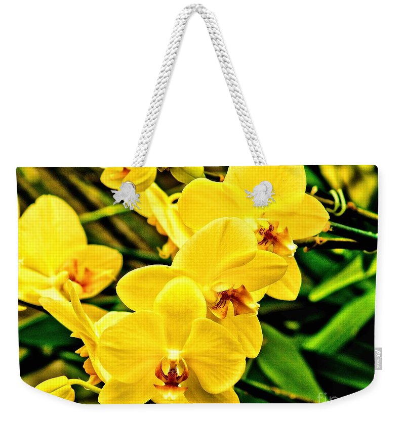 Yellow Weekender Tote Bag featuring the photograph Yellow Orchids by Nick Zelinsky