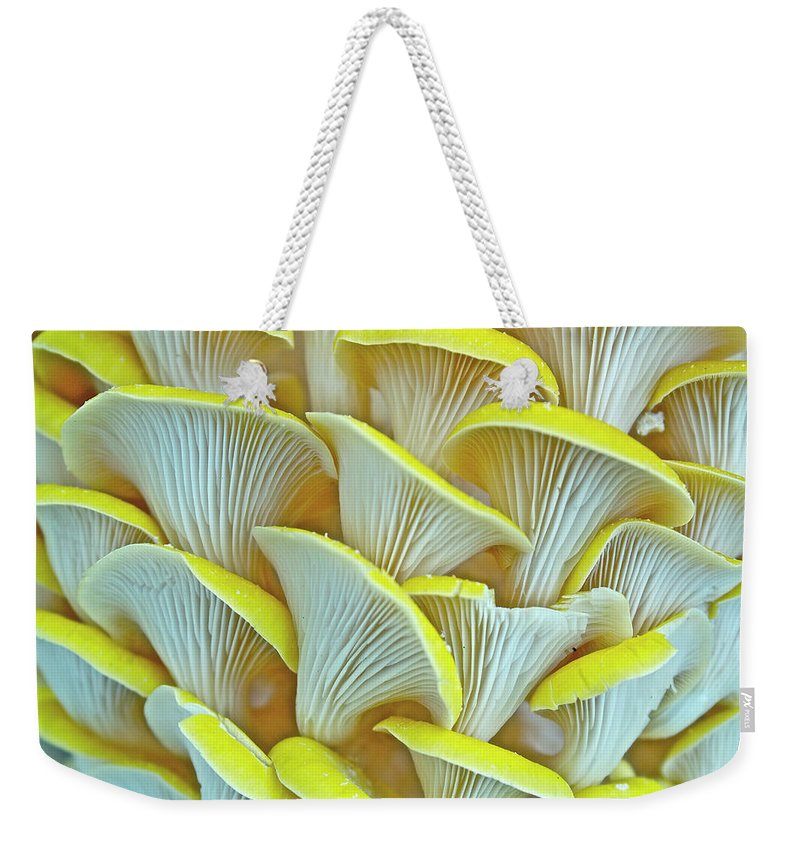Edible Mushroom Weekender Tote Bag featuring the photograph Yellow Oyster Mushrooms by Keith Getter