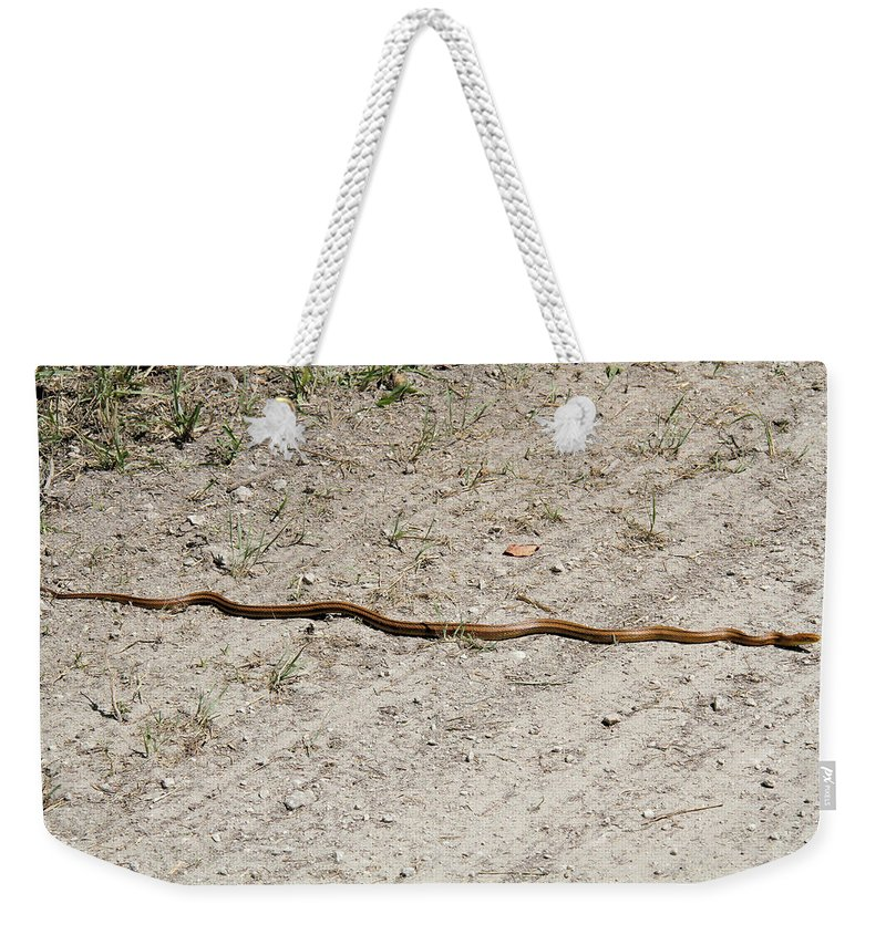 Yellow Rat Snake Weekender Tote Bag featuring the photograph Yellow Rat Snake by Doris Potter