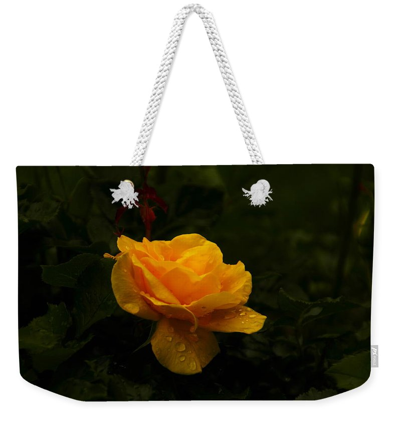 Yellow Weekender Tote Bag featuring the photograph Yellow Rose Dapples With Waterdfrops by Jeff Swan