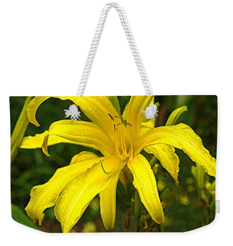 Lily Weekender Tote Bag featuring the photograph Yellow Spider Lily 21 by Douglas Barnett