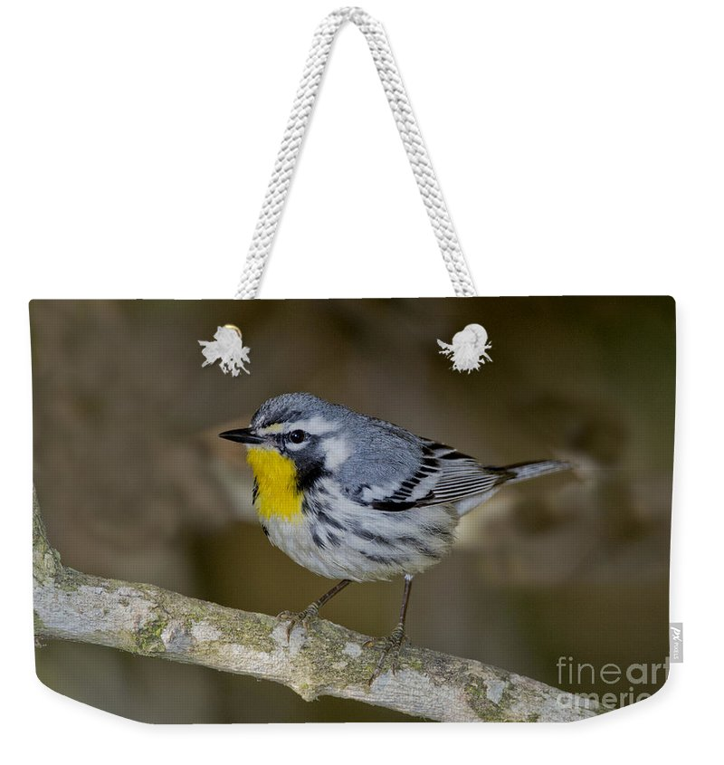 Yellow-throated Warbler Weekender Tote Bag featuring the photograph Yellow-throated Warbler by Anthony Mercieca