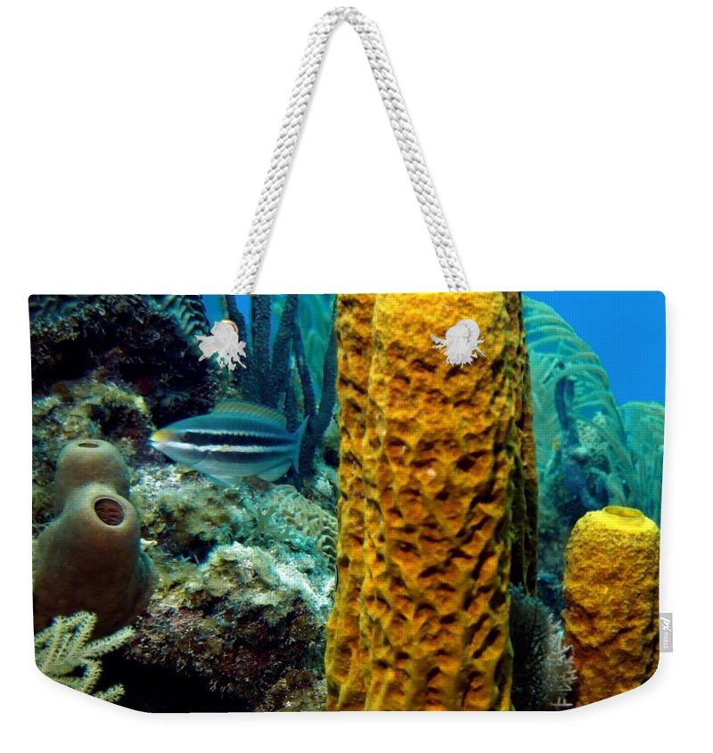 Nature Weekender Tote Bag featuring the photograph Yellow Tube Sponge by Amy McDaniel