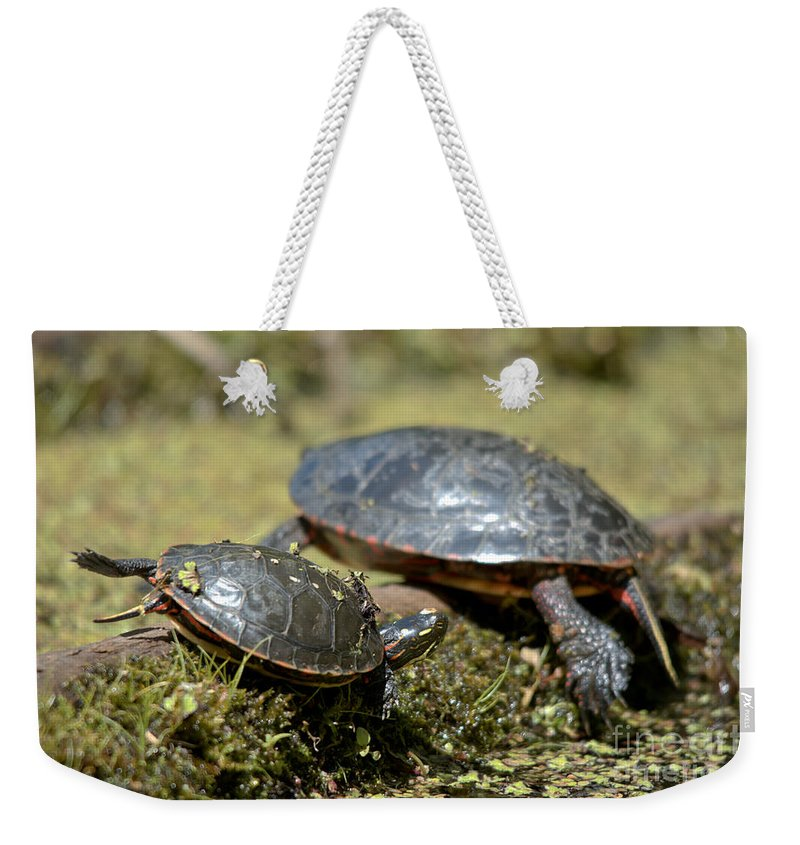 Painted Turtle Weekender Tote Bag featuring the photograph Yoga Turtles by Cheryl Baxter