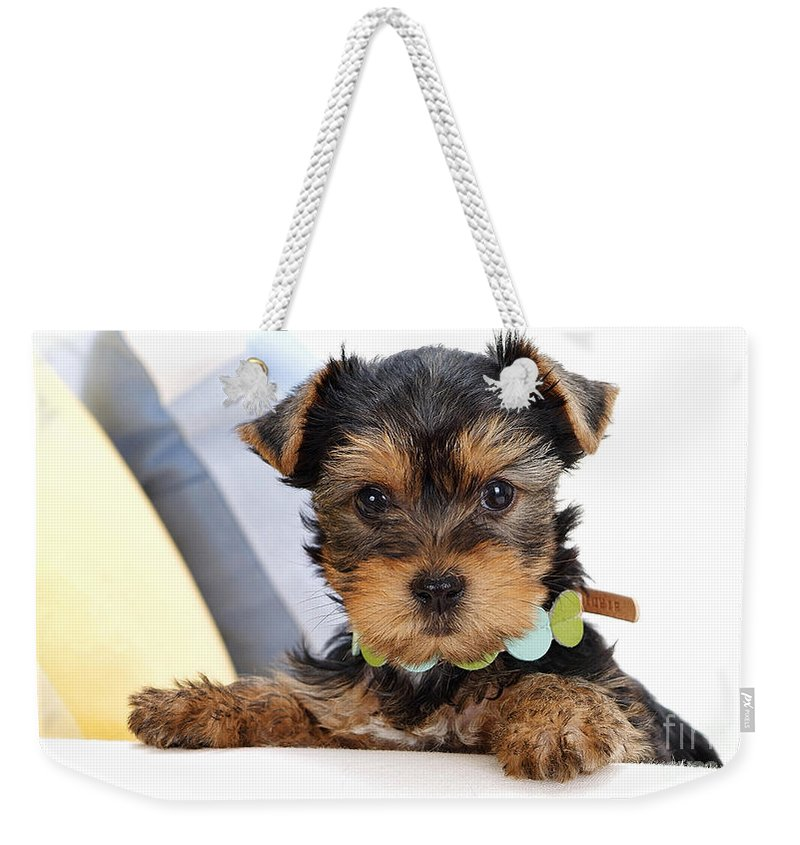 Silky Terrier Paintings Weekender Tote Bag featuring the mixed media Yorkshire Terrier Puppy by Marvin Blaine