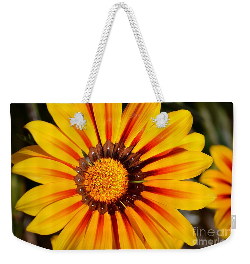 Daisy Weekender Tote Bag featuring the photograph You Are My Sunshine by Deb Halloran