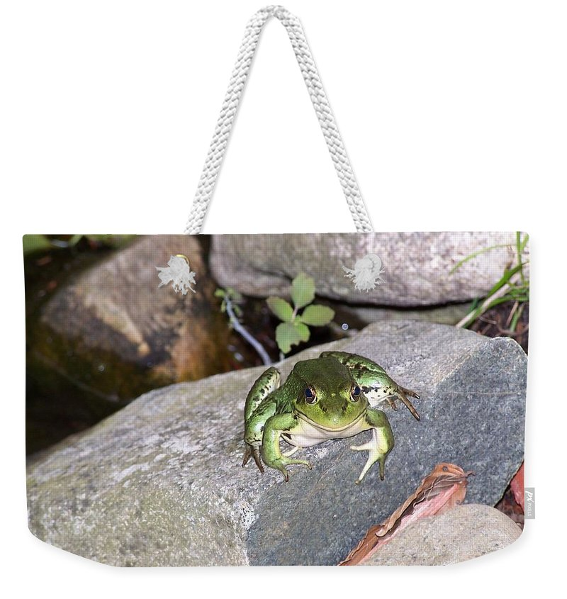 Frog Weekender Tote Bag featuring the photograph You Lookin At Me by Holly Eads