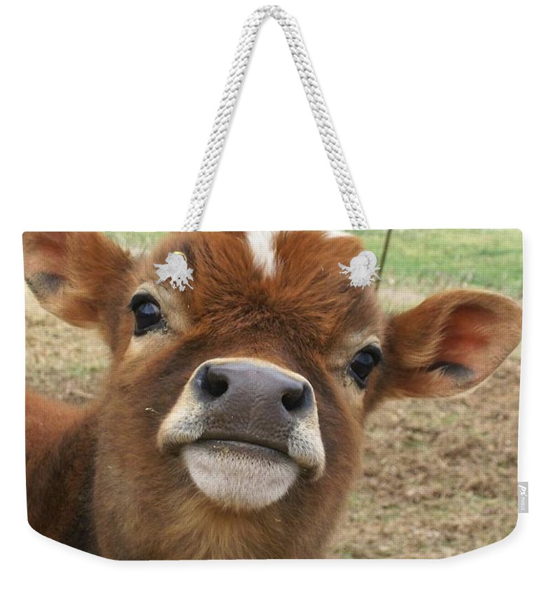Cow Weekender Tote Bag featuring the photograph You Looking At Me by Sara Raber