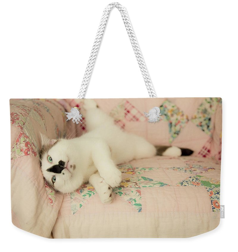 Cat Weekender Tote Bag featuring the photograph You Love Me Don't You by Theresa Tahara