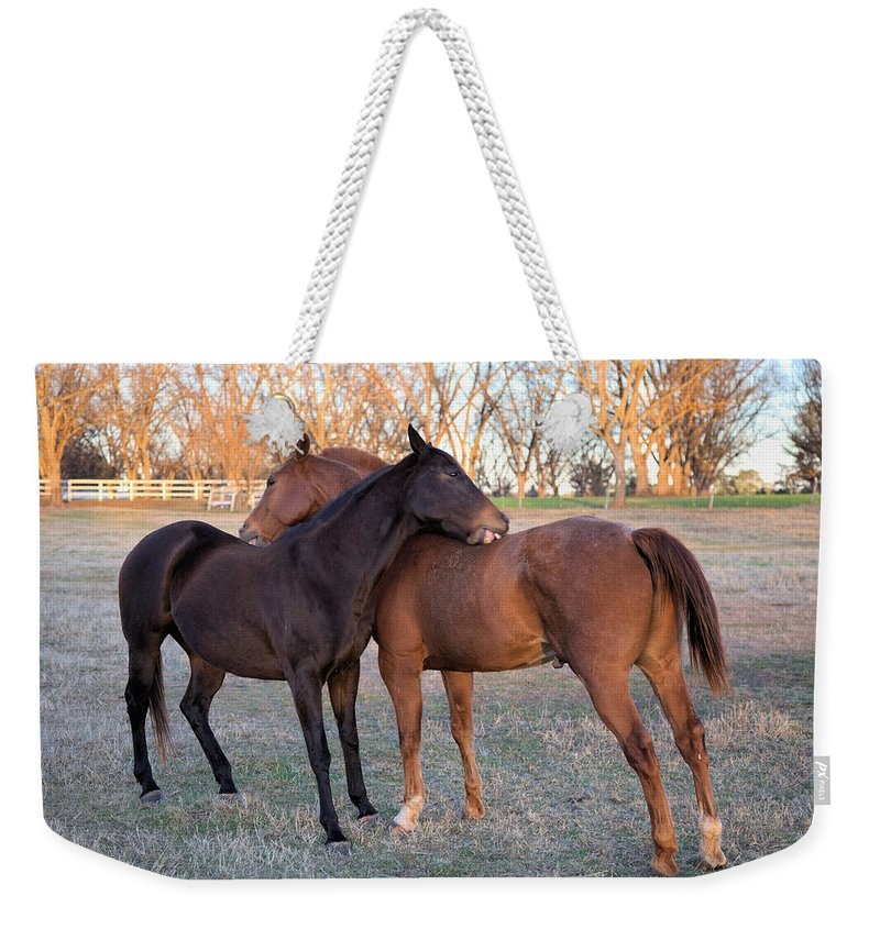 3741 Weekender Tote Bag featuring the photograph You Scratch My Back And I'll Scratch Yours by Gordon Elwell