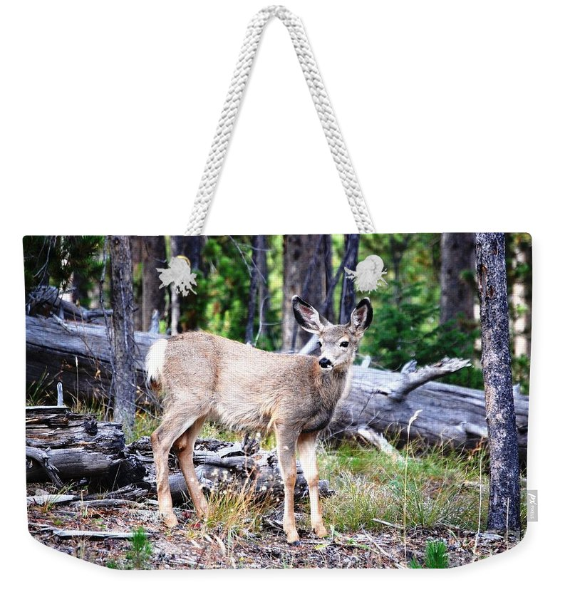 Deer Weekender Tote Bag featuring the photograph Young Beauty by Deanna Cagle