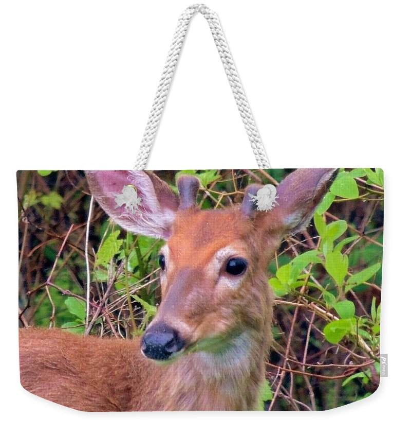 Wildlife Weekender Tote Bag featuring the photograph Young Buck by Paul Smith