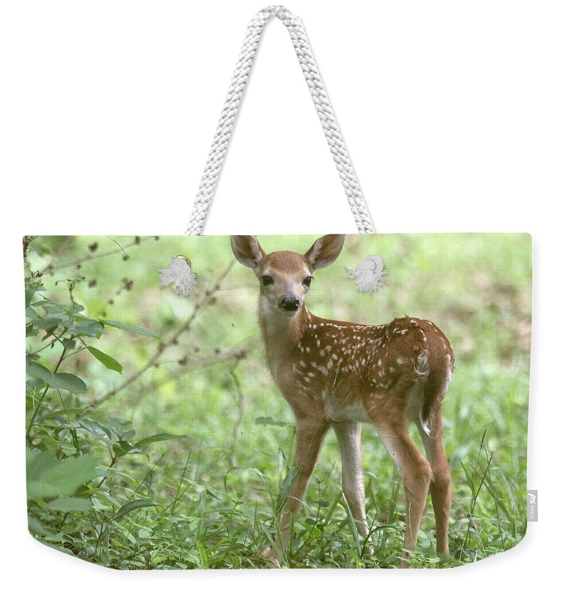 Deer Weekender Tote Bag featuring the photograph Young Fawn In The Woods by Myrna Bradshaw
