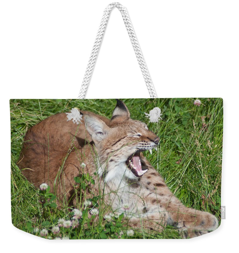 Alone Weekender Tote Bag featuring the photograph Young Lynx Yawning by Jill Mitchell