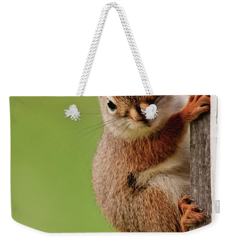 Red Squirrel Weekender Tote Bag featuring the photograph Young Red Squirrel by Cheryl Baxter