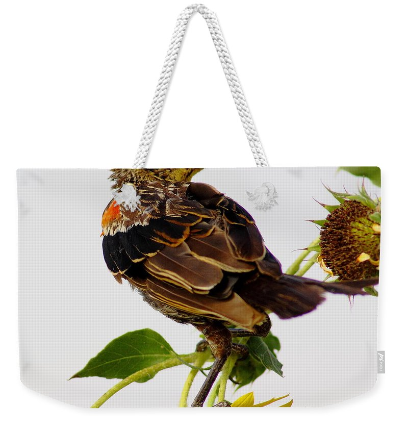 Nature Weekender Tote Bag featuring the photograph Young Redwing In The Wind by Robert Frederick