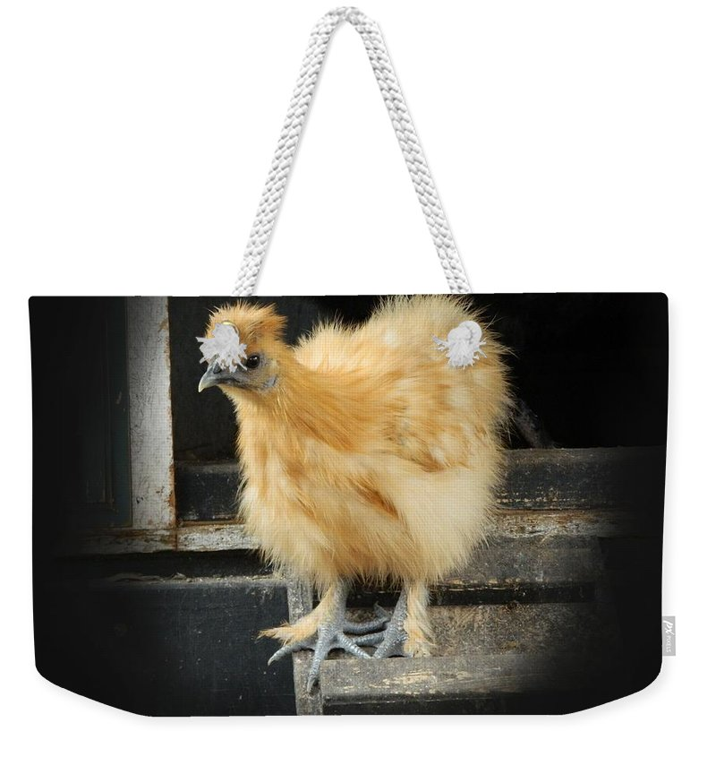 Silkie Weekender Tote Bag featuring the photograph Young Silkie by George Pedro