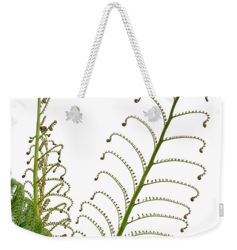 Botanical Weekender Tote Bag featuring the photograph Young Spring Fronds Of Silver Tree Fern On White by Stephan Pietzko