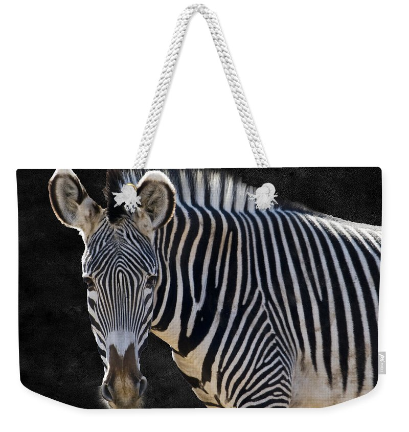 Animal Weekender Tote Bag featuring the photograph Z Is For Zebra by Juli Scalzi