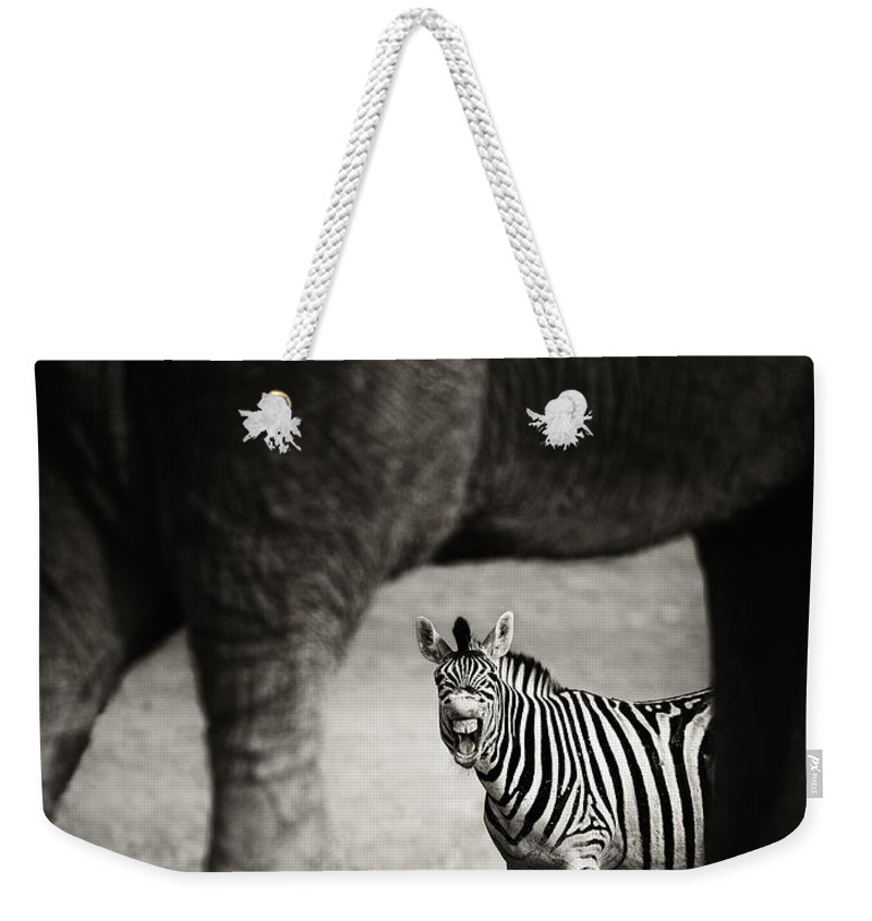 Wild Weekender Tote Bag featuring the photograph Zebra Barking by Johan Swanepoel