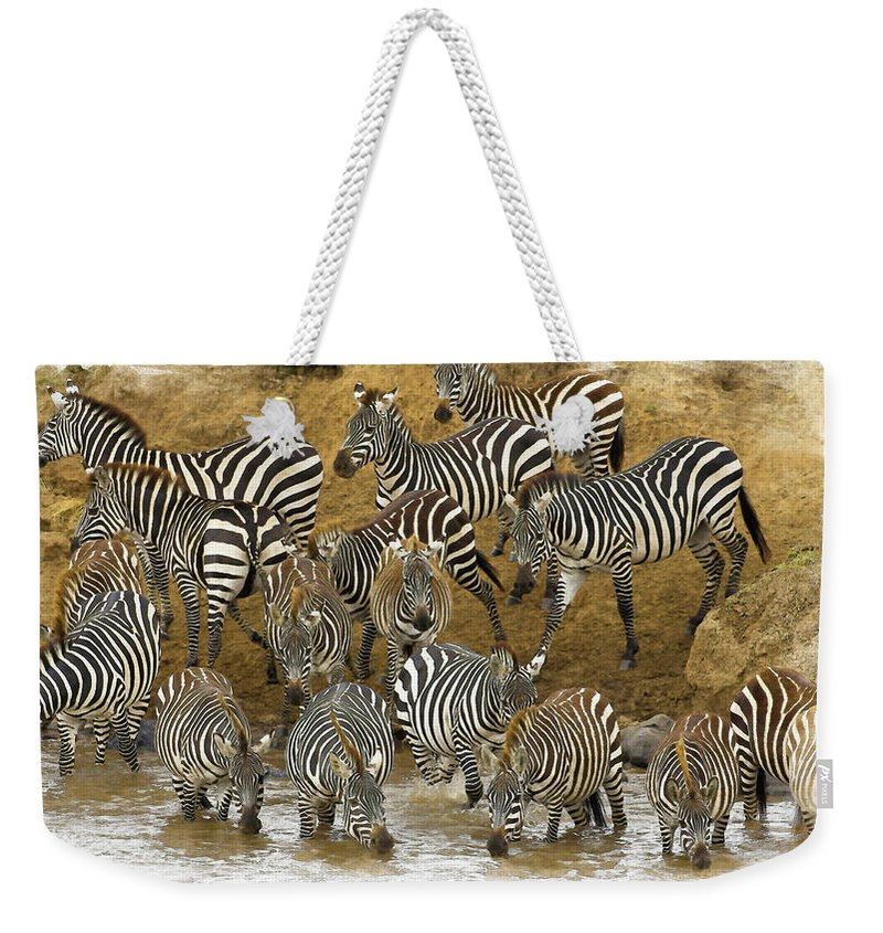 African Elephants Weekender Tote Bag featuring the digital art Zebra by Don Kuing