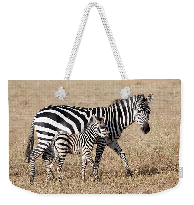 Kenya Weekender Tote Bag featuring the photograph Zebra With Young Foal, Masai Mara by Angelika