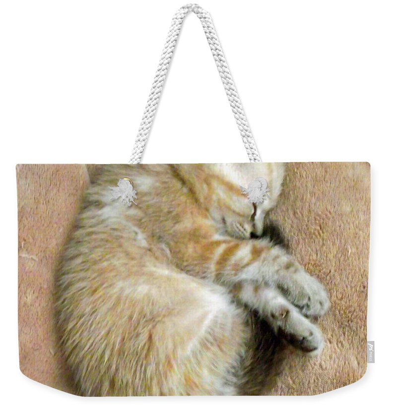 Duane Mccullough Weekender Tote Bag featuring the photograph Zing The Kitten by Duane McCullough