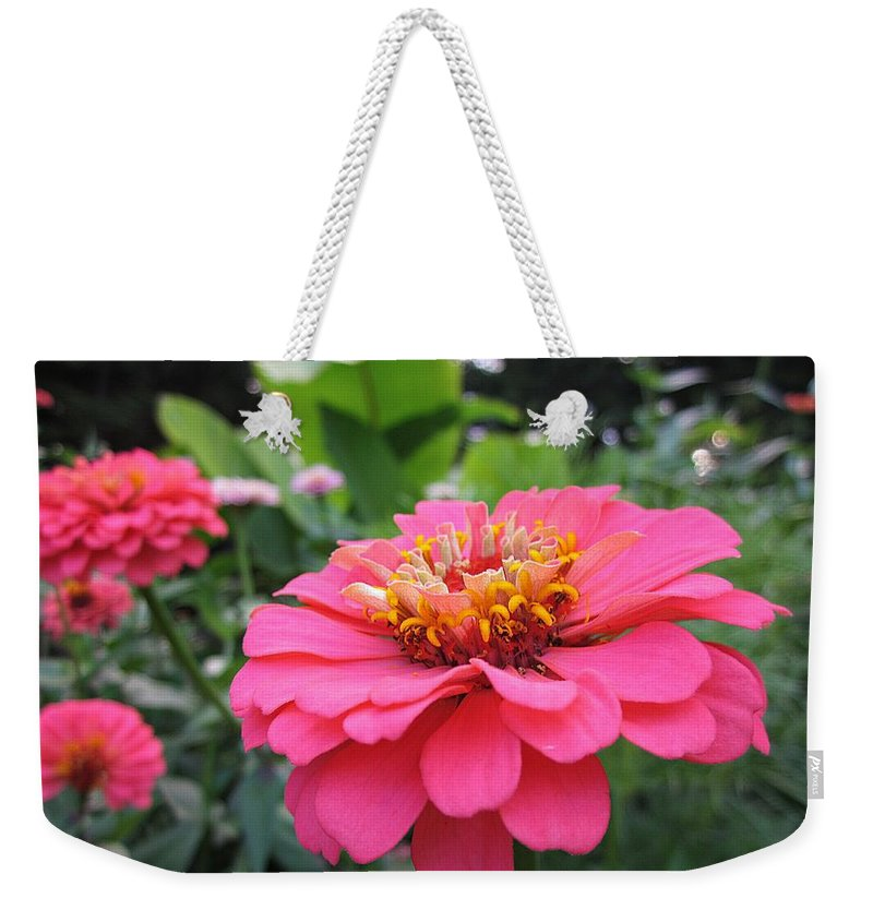 Zinnias Weekender Tote Bag featuring the photograph Zinnias by MTBobbins Photography