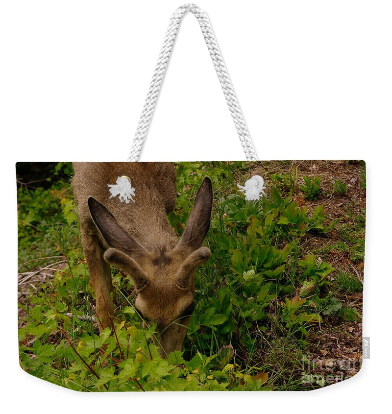 Deer Weekender Tote Bag featuring the photograph A Young Buck Grazing by Jeff Swan
