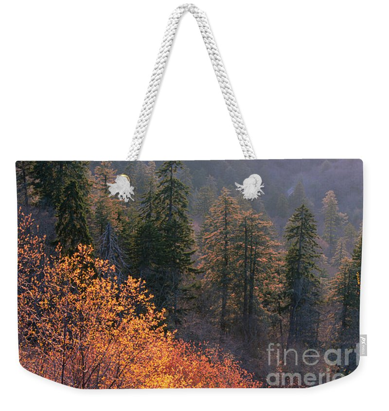 Weekender Tote Bag featuring the photograph Great Smoky Mountains Morning by Sandra Bronstein