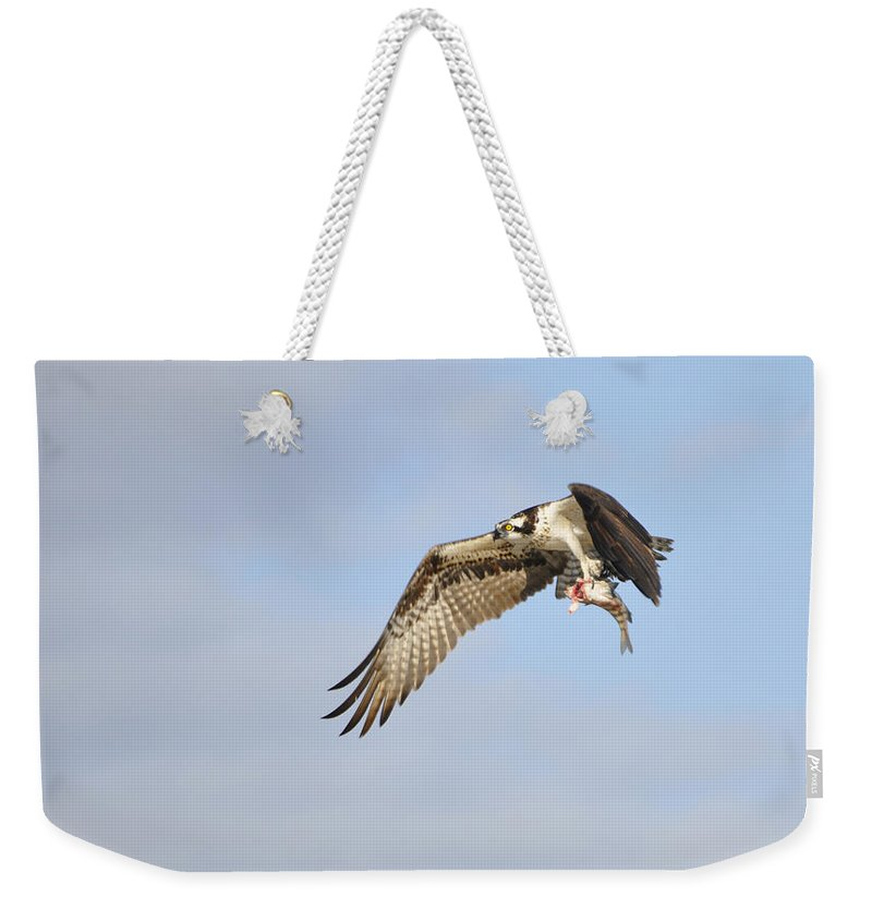Osprey Weekender Tote Bag featuring the photograph Osprey Lunch To Go I by Christine Stonebridge