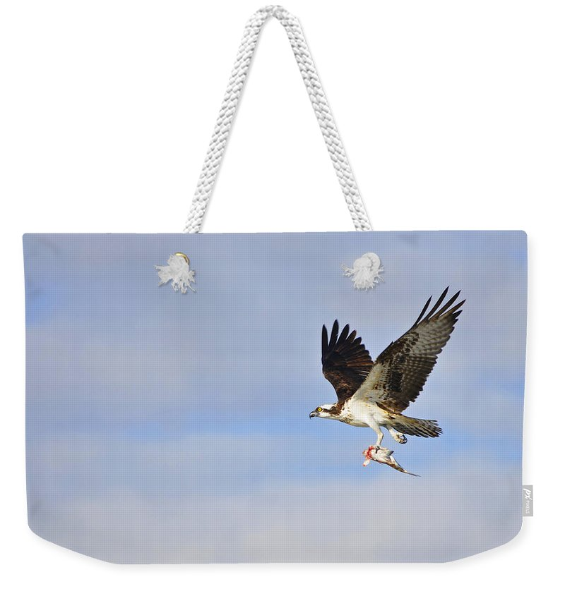 Osprey Weekender Tote Bag featuring the photograph Osprey Lunch To Go II by Christine Stonebridge