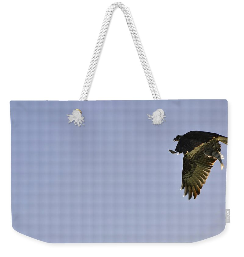 Osprey Weekender Tote Bag featuring the photograph Osprey Lunch To Go III by Christine Stonebridge