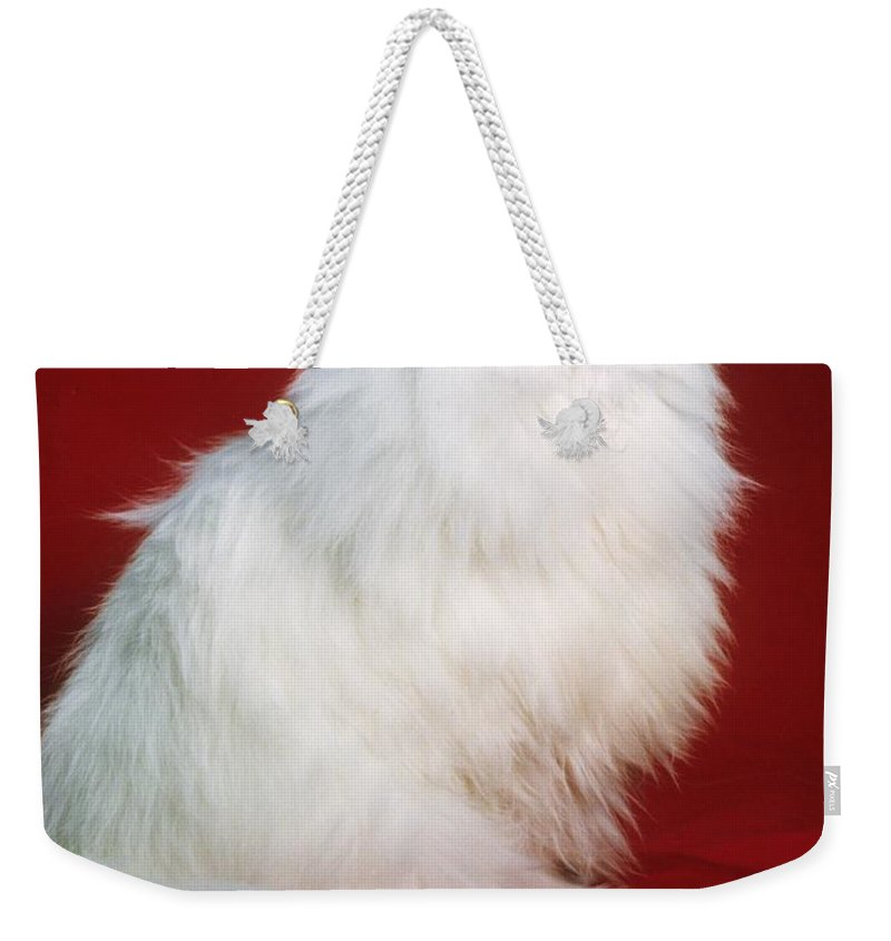 Persian Cat Weekender Tote Bag featuring the photograph Persian Cat In Distress by Larry Allan