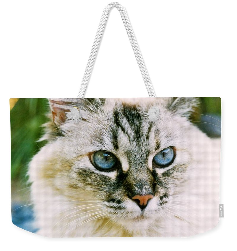 Mixed Breed Cat Weekender Tote Bag featuring the photograph Pretty Blue Eyes--mia by Larry Allan