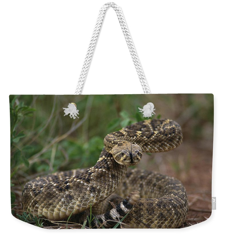 North America Weekender Tote Bag featuring the photograph A Western Diamondback Rattlesnake by Joel Sartore