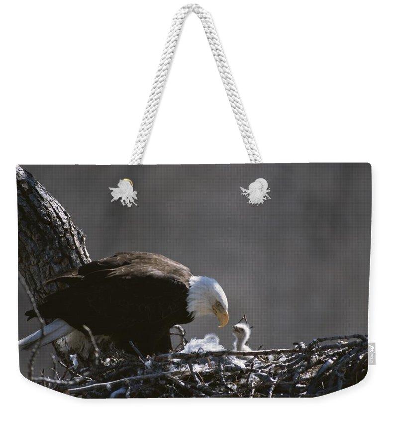 Animals Weekender Tote Bag featuring the photograph An American Bald Eagle And Chick by Roy Toft