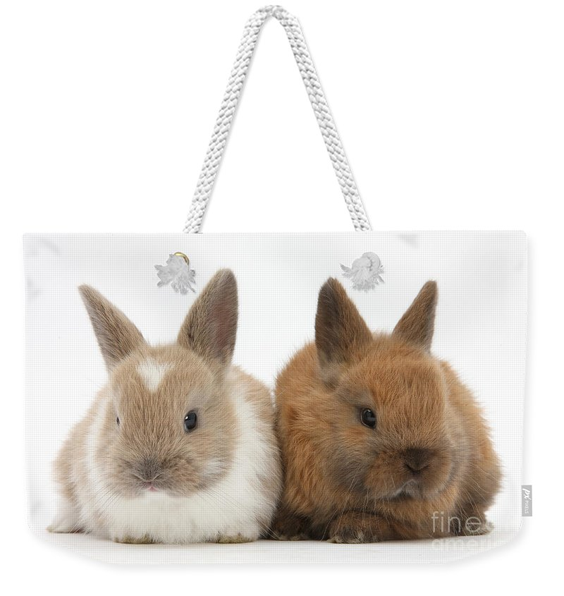 Nature Weekender Tote Bag featuring the photograph Baby Rabbits by Mark Taylor